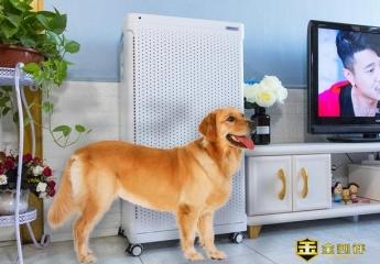 家有宠物,异味细菌如何预防?安美瑞X8空净宠物版给你答案!