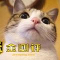 Mr.猫大大