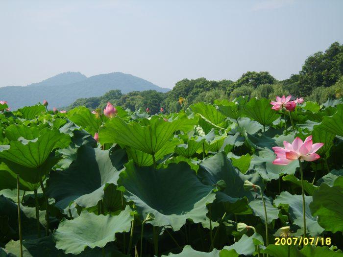 anhongqiu